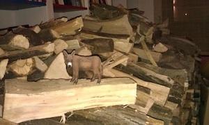 brennholz4